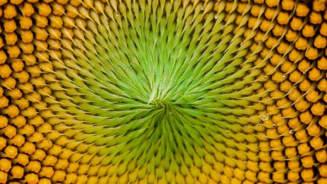 application of maths in nature