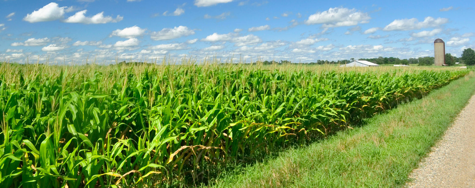 application of green chemistry in agriculture