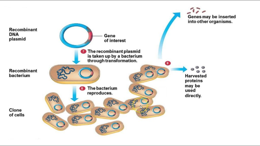 application of recombinant dna technology in environment
